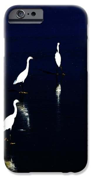 egret reflections iPhone Case by David Lane