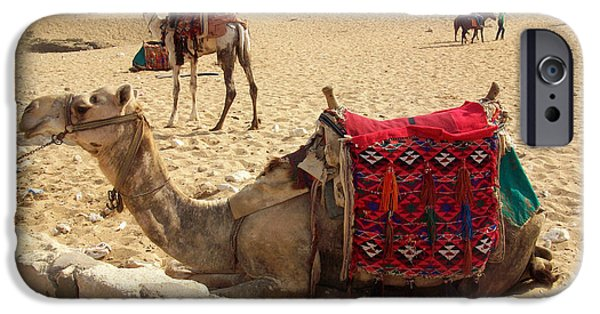 Pyramids Greeting Cards iPhone Cases - Egypt - Camel getting ready for the ride iPhone Case by Munir Alawi