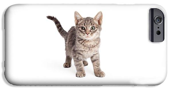 Domestic Short Hair Cat iPhone Cases - Eight Week Old Playful Tabby Kitten iPhone Case by Susan  Schmitz