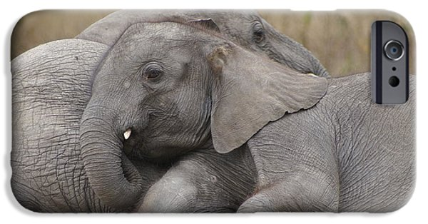 Elephants iPhone Cases - Ele-Orphans iPhone Case by Brandy Herren