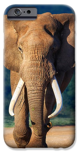 Nobody Photographs iPhone Cases - Elephant approaching iPhone Case by Johan Swanepoel