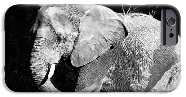 Elephants iPhone Cases - Elephant iPhone Case by Camille Lopez