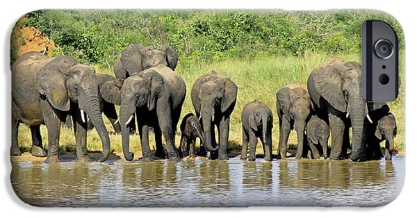 Elephants iPhone Cases - Elephant Herd iPhone Case by Tony Murtagh