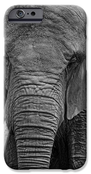 Elephants iPhone Cases - Elephant in Black and White iPhone Case by Matt Plyler