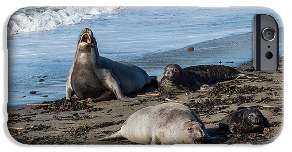 Elephants iPhone Cases - Elephant Seals at San Simeon iPhone Case by Patti Deters