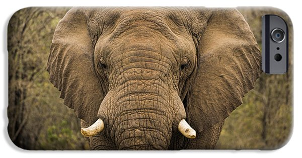Snake iPhone Cases - Elephant Watching iPhone Case by Stephen Stookey