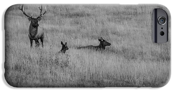 Bull Pyrography iPhone Cases - Elk Family in Meadow BW iPhone Case by Rick Strobaugh