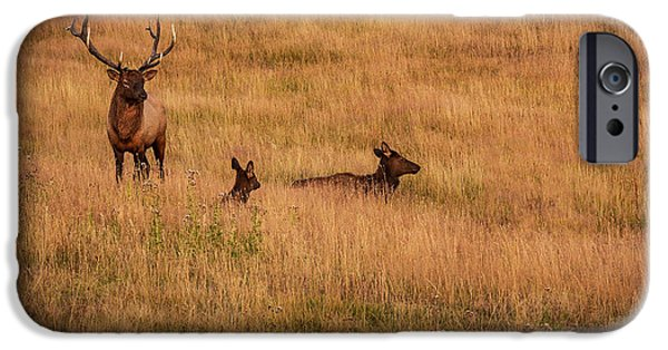 Bull Pyrography iPhone Cases - Elk Family in Meadow iPhone Case by Rick Strobaugh