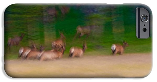 Run iPhone Cases - Elk on the Run iPhone Case by Sebastian Musial
