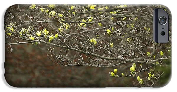 Snake iPhone Cases - Emerging Yellow Magnolia Blossoms At The Wegerzyn Garden Center Dayton Ohio 4-14-2015 iPhone Case by Thomas Minutolo
