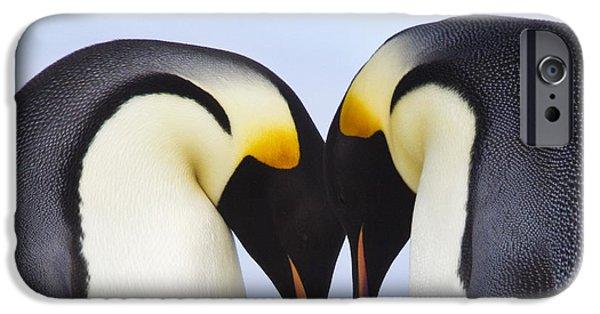 Bonding iPhone Cases - Emperor Penguin Greeting iPhone Case by Jean-Louis Klein & Marie-Luce Hubert