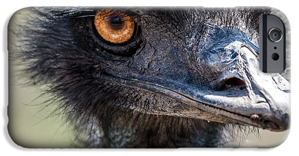 Emu iPhone Cases - Emu Eyes iPhone Case by Paul Freidlund