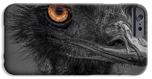 Emu iPhone Cases - Emu iPhone Case by Paul Freidlund