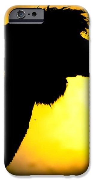 Llama iPhone Cases - Endless Alpaca iPhone Case by TC Morgan