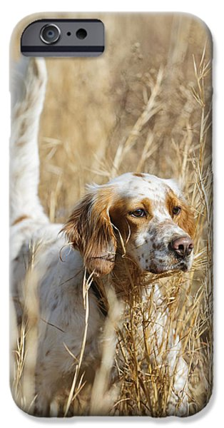 Setter Pointer iPhone Cases - English setter iPhone Case by Chip Laughton