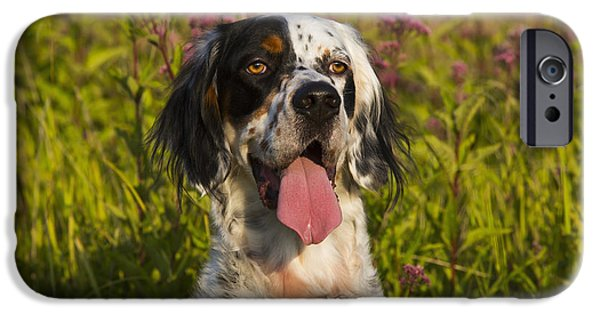 Dog And Wildflowers iPhone Cases - English Setter In Late Summer iPhone Case by Lynn Stone