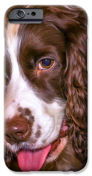 Dog Close-up iPhone Cases - English Springer Spaniel - Paint iPhone Case by Steve Harrington