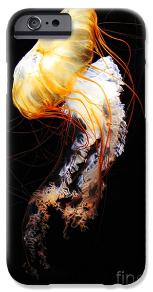 Aquarium Fish iPhone Cases - Enigma iPhone Case by Andrew Paranavitana