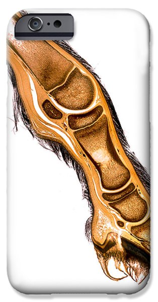 Feet Sculptures iPhone Cases - Equine foal distal limb hoof anatomy specimen 30152  iPhone Case by Christoph Von Horst