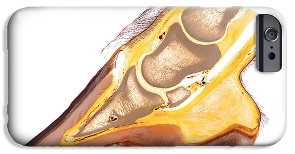 Feet Sculptures iPhone Cases - Equine foot anatomy 30215 iPhone Case by Christoph Von Horst