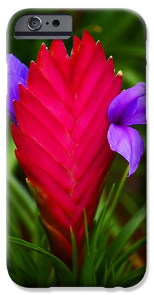 Bromeliad iPhone Cases - Eruption iPhone Case by Melanie Moraga