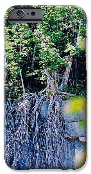 Ledge iPhone Cases - Escarpment Cedars iPhone Case by John Turner