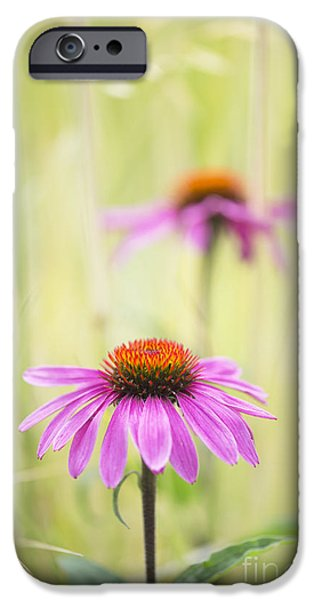 Echinacea iPhone Cases - Essence of Echinacea iPhone Case by Tim Gainey