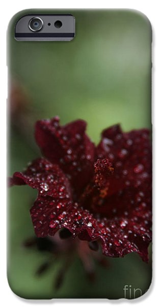 Red Leaf Digital iPhone Cases - Eternal Harmony iPhone Case by Sharon Mau