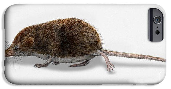 Nature Study Drawings iPhone Cases - Eurasian Pygmy Shrew - Sorex minutus - Musaraigne pygmee - Musar iPhone Case by Urft Valley Art