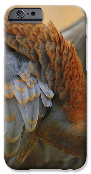 Evolving Sandhill Crane Beauty iPhone Case by Carol Groenen