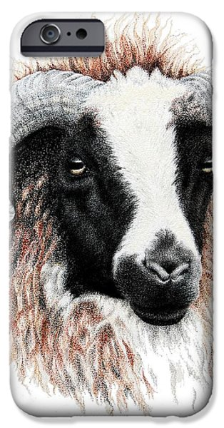 Agriculture Drawings iPhone Cases - Ewe iPhone Case by Sandra Moore