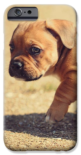 Puppy Lover iPhone Cases - Exploring the Big World iPhone Case by Jenny Rainbow