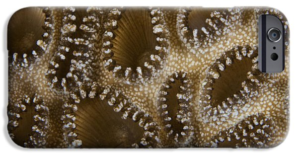 Undersea Photography iPhone Cases - Extreme Close-up Of A Crust Anemone iPhone Case by Terry Moore