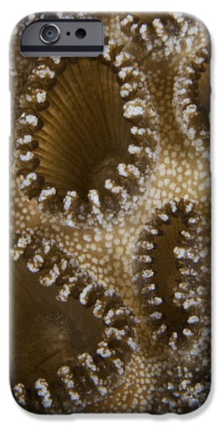 Extreme Close-up Of A Crust Anemone iPhone Case by Terry Moore