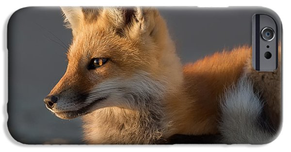 Beach iPhone Cases - Eye of the Fox iPhone Case by Bill Wakeley