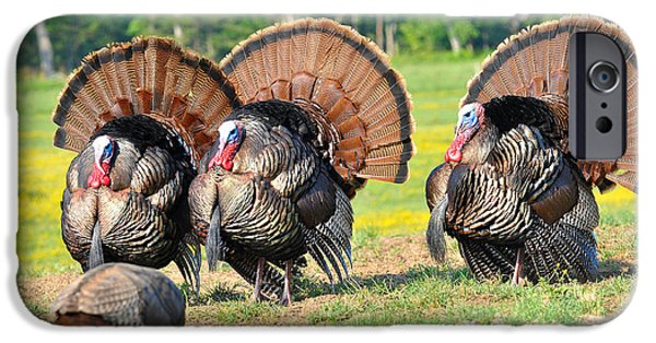 Eastern Wild Turkey iPhone Cases - Eyes On The Prize iPhone Case by Todd Hostetter