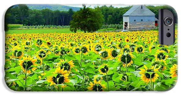 Buttonwood Farm iPhone Cases - Face To Face iPhone Case by Ursula Coccomo