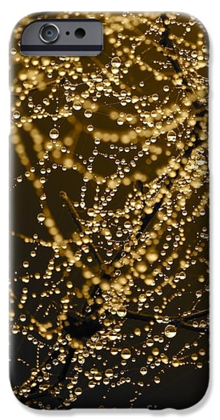 Drops Of Water iPhone Cases - Fairy Lanterns iPhone Case by Carol Groenen