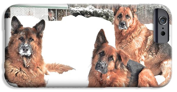 Puppies iPhone Cases - Falco Oskar and Kayla iPhone Case by Danielle Sigmon