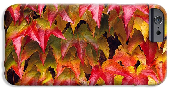 Rita iPhone Cases - Fall Colored Ivy iPhone Case by Rita Ariyoshi - Printscapes
