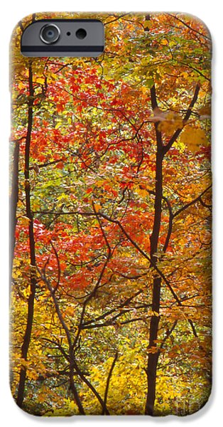 Southern Indiana iPhone Cases - Fall Colors in Indiana iPhone Case by Lowell Anderson