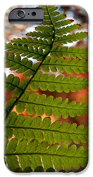 Nature Abstract iPhone Cases - Fall Fern iPhone Case by Gwyn Newcombe