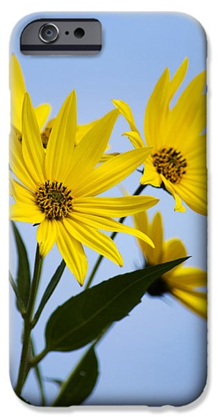 Floral Photographs iPhone Cases - Fall Flowers iPhone Case by Christina Rollo