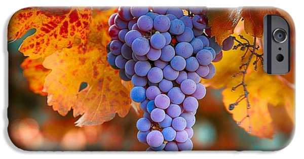 Crops iPhone Cases - Fall grapes from the Yakima Valley,  iPhone Case by Lynn Hopwood