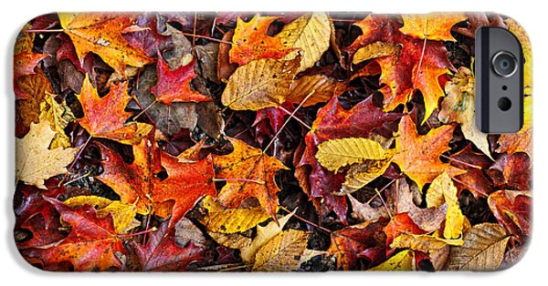 Fallen Leaves iPhone Cases - Fall leaves background iPhone Case by Elena Elisseeva