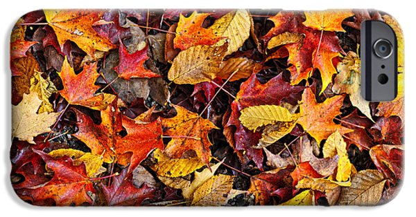 Fallen Leaves iPhone Cases - Fall leaves on forest floor iPhone Case by Elena Elisseeva