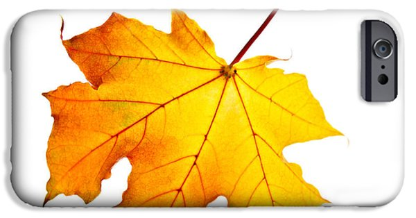 Autumn Trees iPhone Cases - Fall maple leaf iPhone Case by Elena Elisseeva