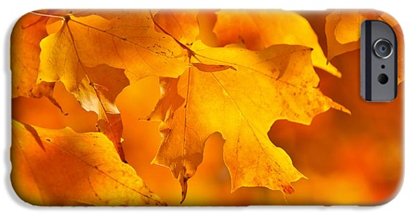 Forest Detail iPhone Cases - Fall maple leaves iPhone Case by Elena Elisseeva