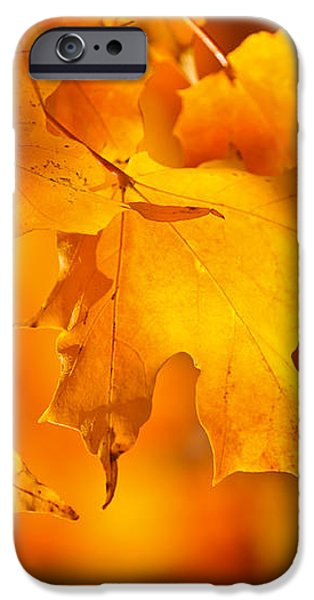 Fall maple leaves iPhone Case by Elena Elisseeva