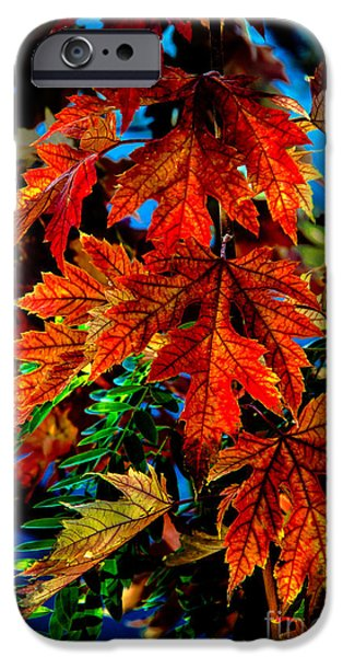 Emmett iPhone Cases - Fall Reds iPhone Case by Robert Bales
